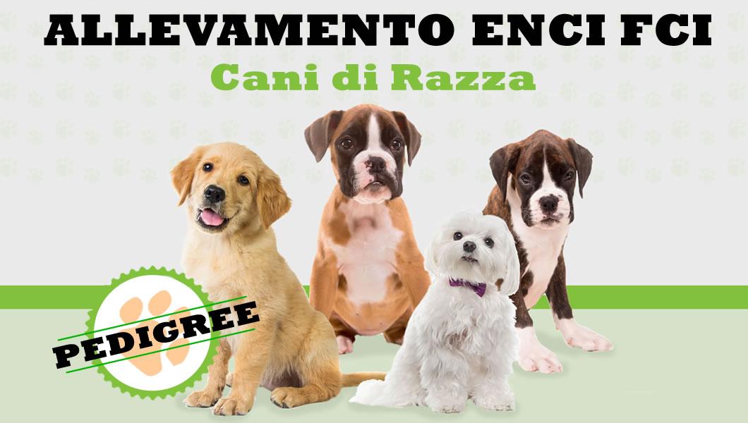 Allevamento Enci Fci Cani di Razza Con Pedigree